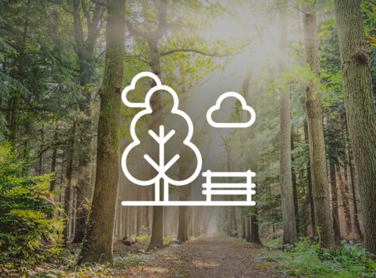 Sonne im Wald mit Bank-Icon davor