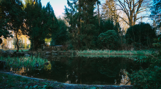 Kleiner Teich im Osnabrücker Bürgerpark