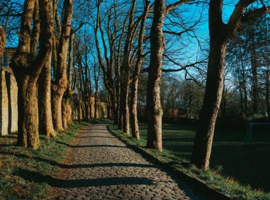 Baumallee zum Osnabrücker Bürgerpark