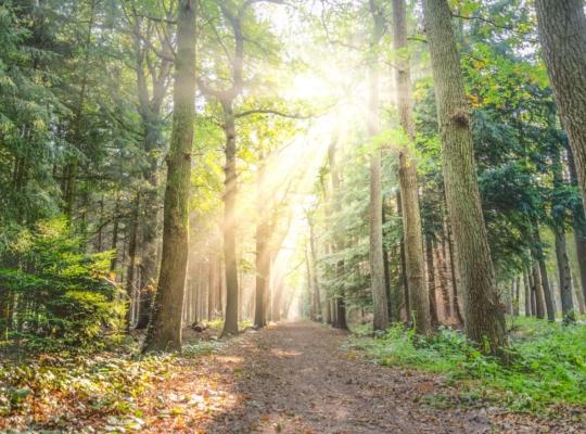 Waldpfand im Grünen mit Sonnenstrahlen durch die Bäume